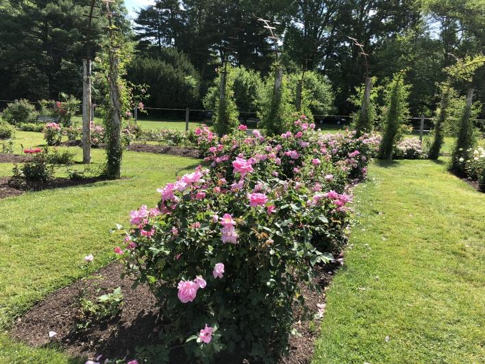elizabeth-park-rose-gardens-west-hartford (16)