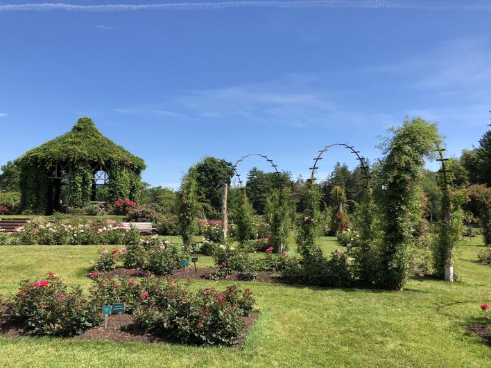 elizabeth-park-rose-gardens-west-hartford (17)