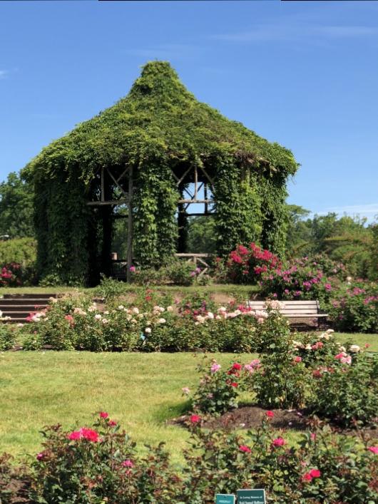 elizabeth-park-rose-gardens-west-hartford (18)