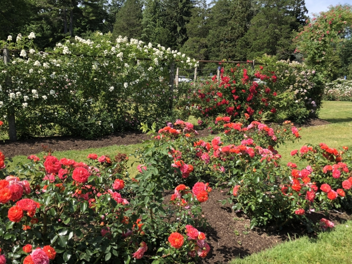 elizabeth-park-rose-gardens-west-hartford (19)