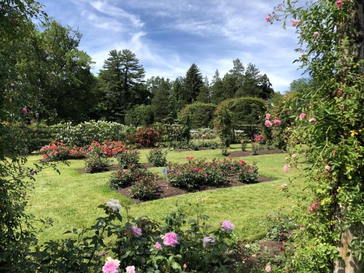 elizabeth-park-rose-gardens-west-hartford (22)