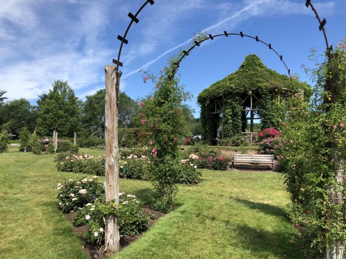 elizabeth-park-rose-gardens-west-hartford (24)
