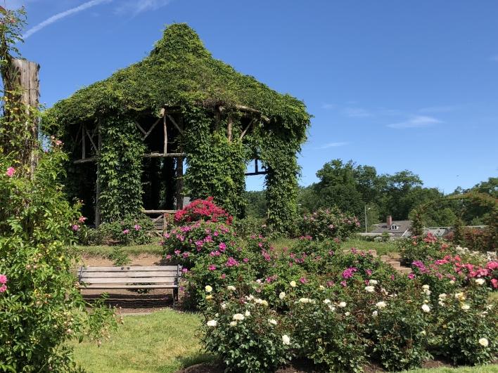 elizabeth-park-rose-gardens-west-hartford (25)
