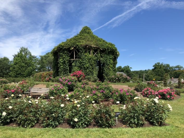 elizabeth-park-rose-gardens-west-hartford (26)