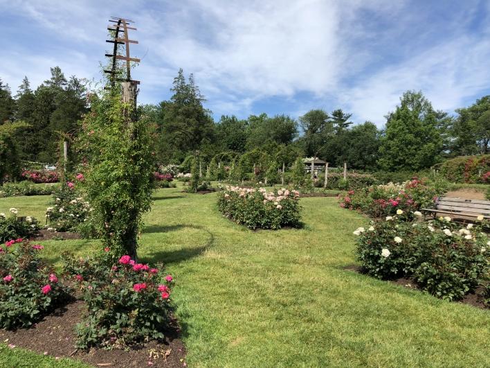 elizabeth-park-rose-gardens-west-hartford (27)