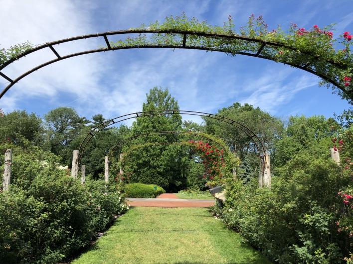 elizabeth-park-rose-gardens-west-hartford (29)