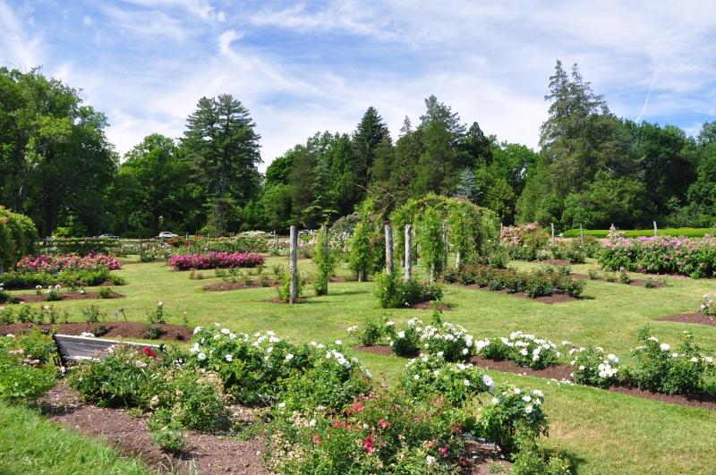 elizabeth-park-rose-gardens-west-hartford (3)