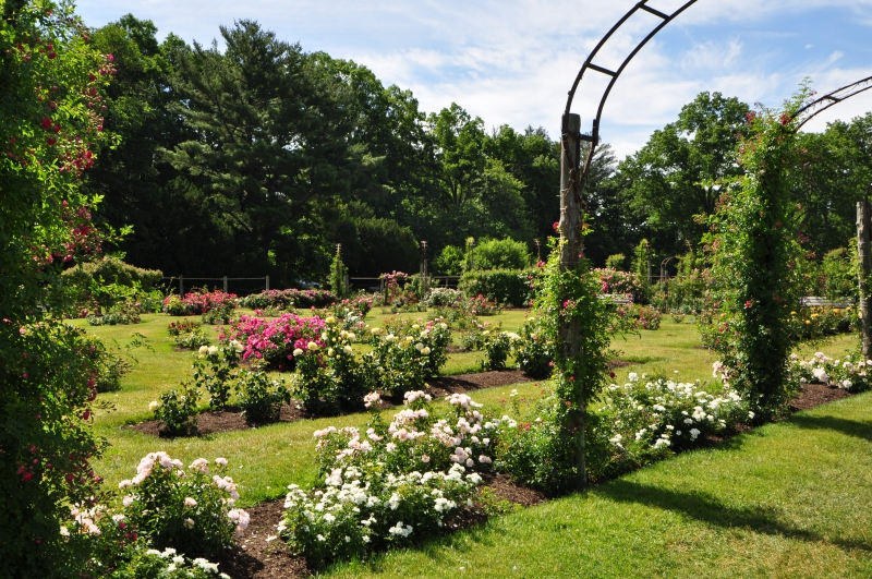 elizabeth-park-rose-gardens-west-hartford (31)