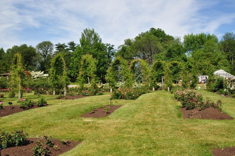 elizabeth-park-rose-gardens-west-hartford (32)