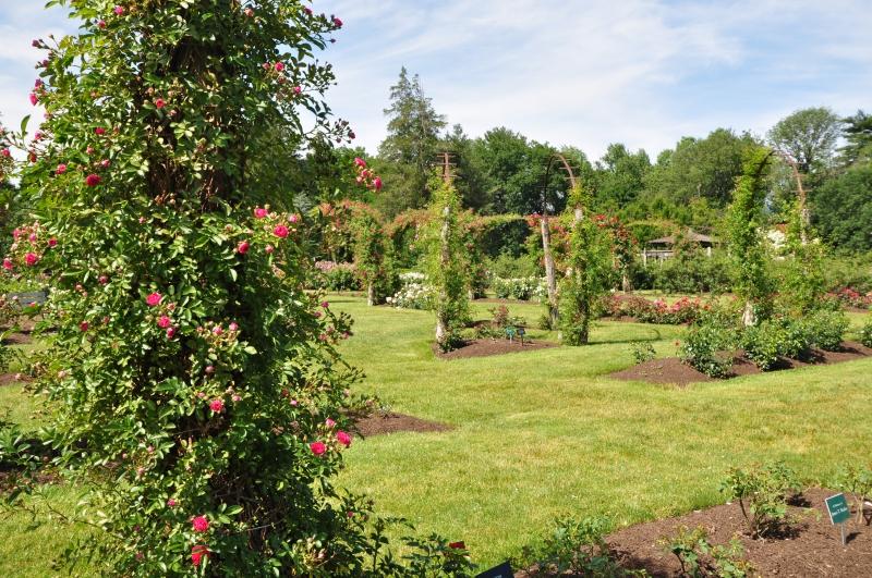 elizabeth-park-rose-gardens-west-hartford (33)