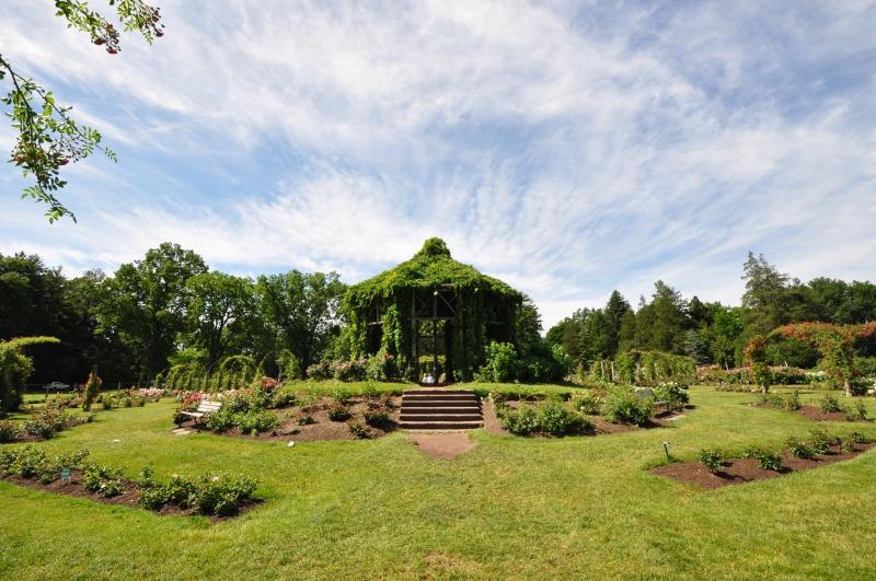 elizabeth-park-rose-gardens-west-hartford (34)