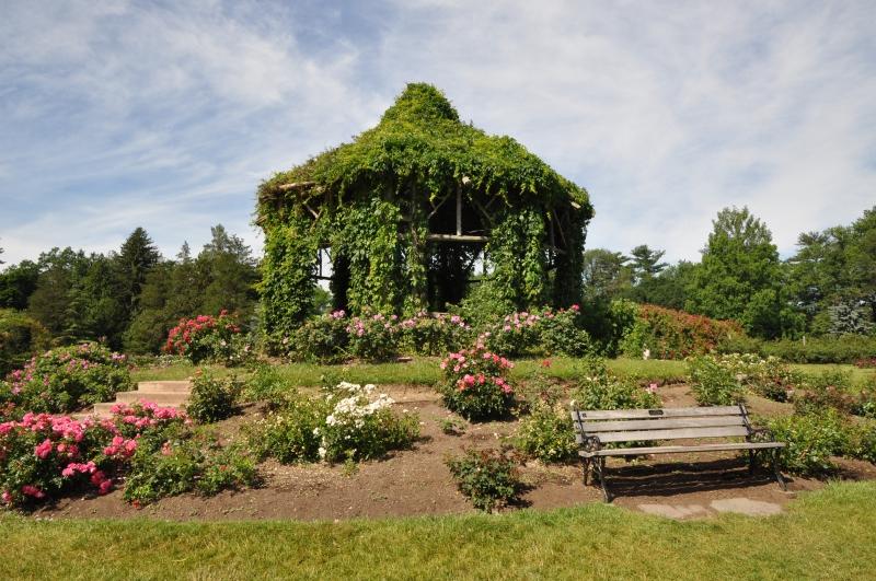 elizabeth-park-rose-gardens-west-hartford (36)