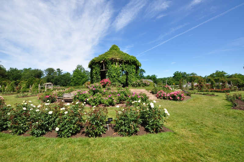 elizabeth-park-rose-gardens-west-hartford (38)