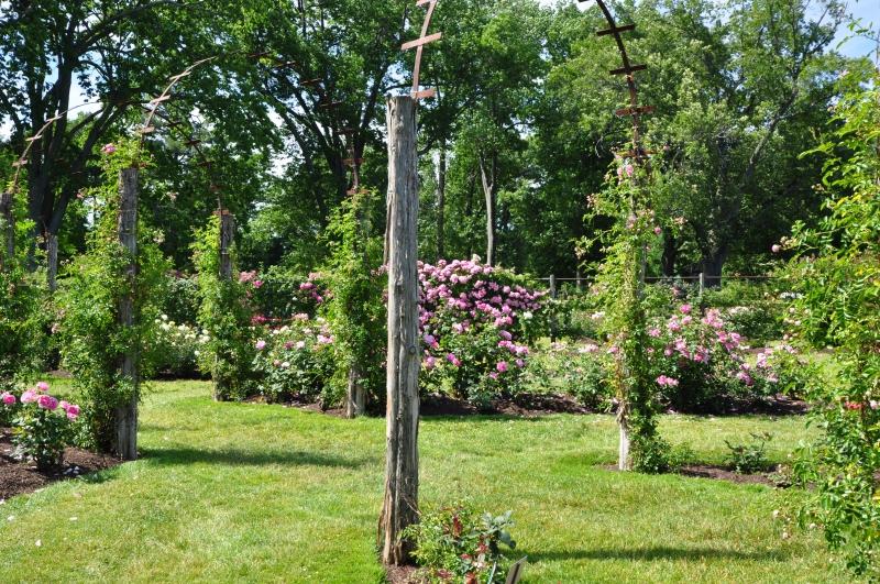 elizabeth-park-rose-gardens-west-hartford (39)