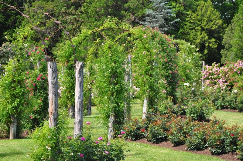 elizabeth-park-rose-gardens-west-hartford (4)