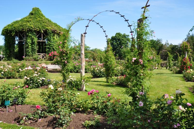 elizabeth-park-rose-gardens-west-hartford (40)