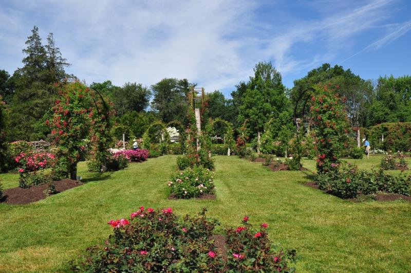 elizabeth-park-rose-gardens-west-hartford (41)