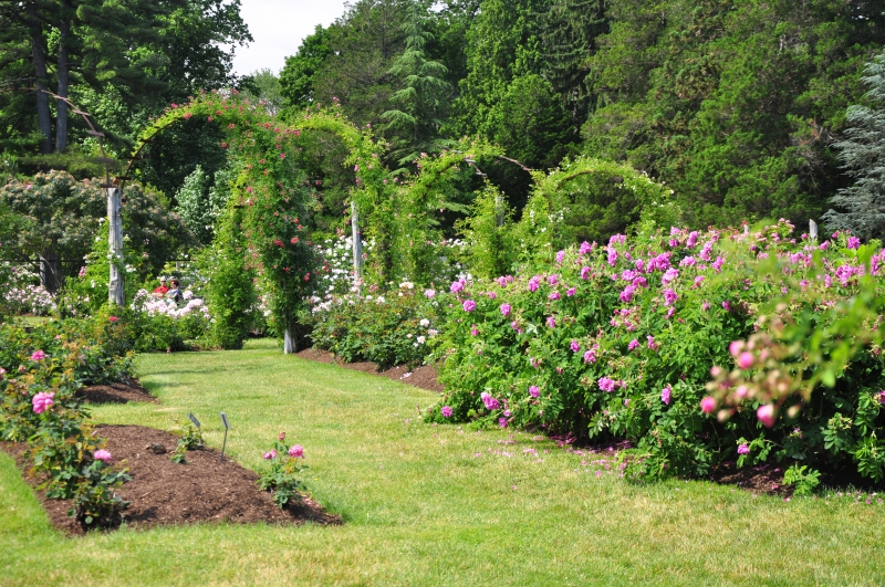 elizabeth-park-rose-gardens-west-hartford (8)