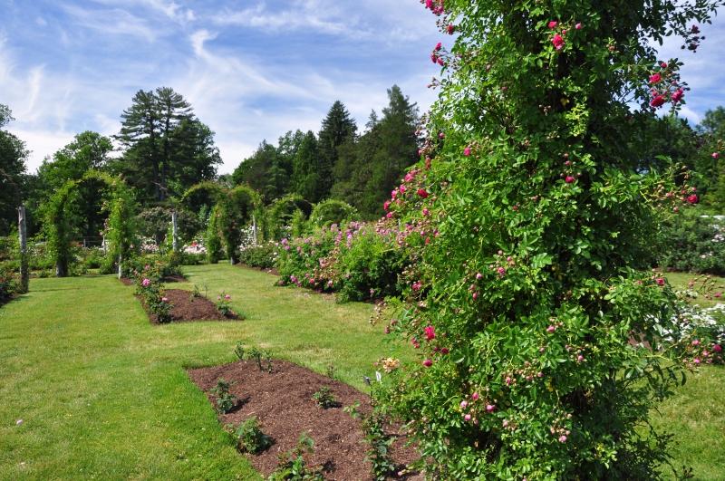 elizabeth-park-rose-gardens-west-hartford (9)