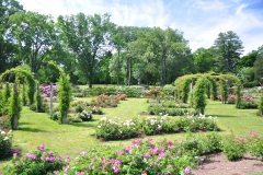 elizabeth-park-rose-gardens-west-hartford (2)