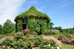 elizabeth-park-rose-gardens-west-hartford (37)