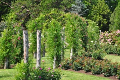 elizabeth-park-rose-gardens-west-hartford (4)