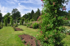 elizabeth-park-rose-gardens-west-hartford (9)