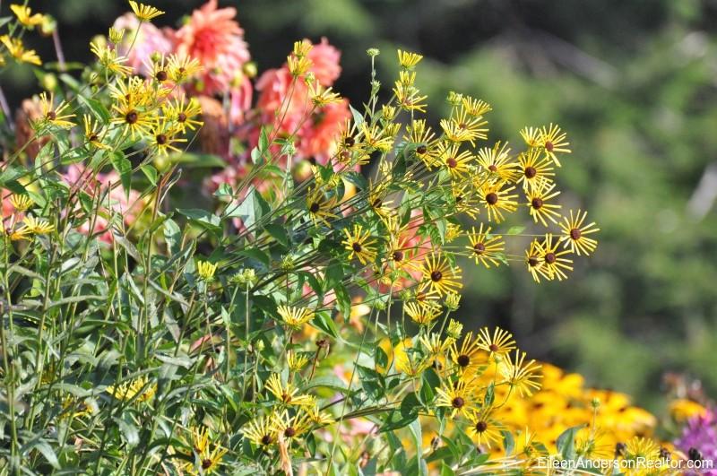 September Blooming Plants (381)