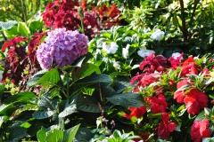 September Blooming Plants (202)