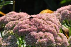 September Blooming Plants (222)