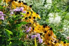 September Blooming Plants (225)