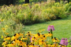 September Blooming Plants (232)
