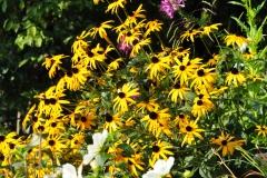 September Blooming Plants (242)