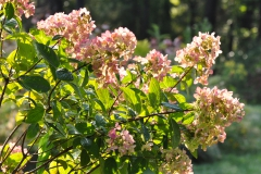 September Blooming Plants (248)