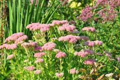 September Blooming Plants (274)