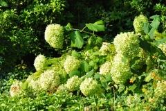 September Blooming Plants (280)