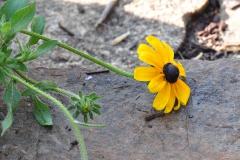 September Blooming Plants (281)