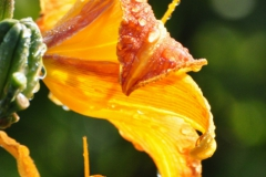 September Blooming Plants (283)