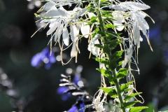 September Blooming Plants (298)
