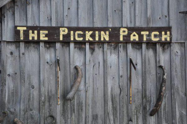 Avon Ct Pickin' Patch Things to do Avon