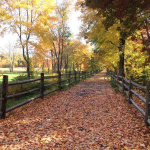 Farmington Rail Trails