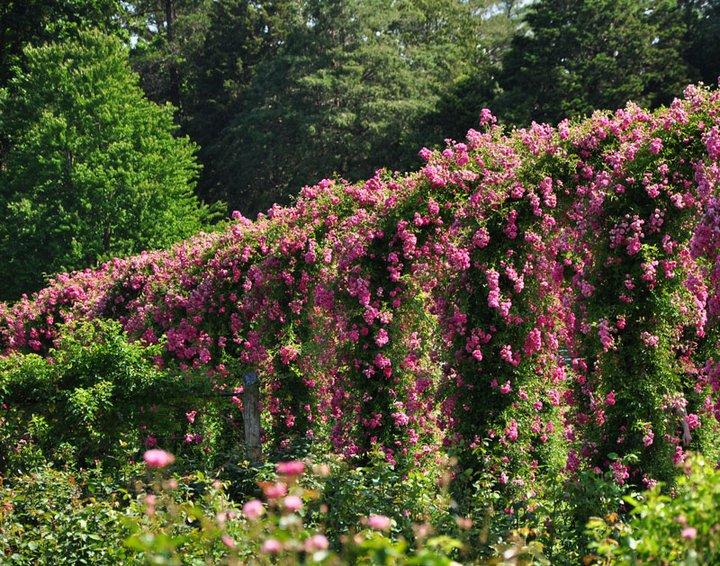 elizabeth-park-gardens-8