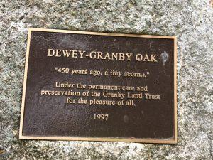 Dewey Granby Oak Granby CT