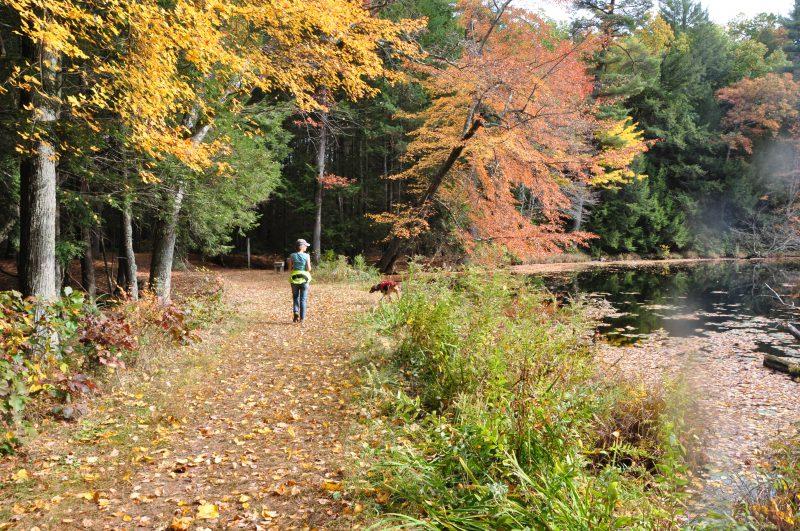Hiking at McLean Game Refuge