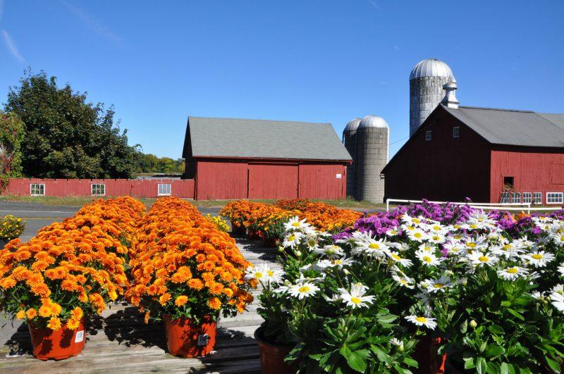 Tulmeadow Farm and Ice Cream