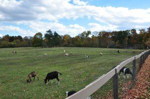 Animals, Westmoor Park, West Hartford CT, realtor, Real estate