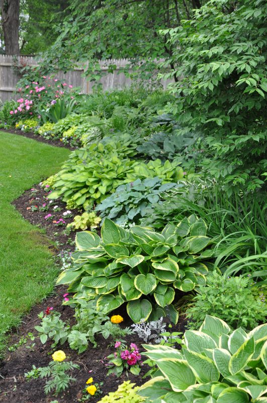 Private shade garden - West Hartford, CT - Hostas
