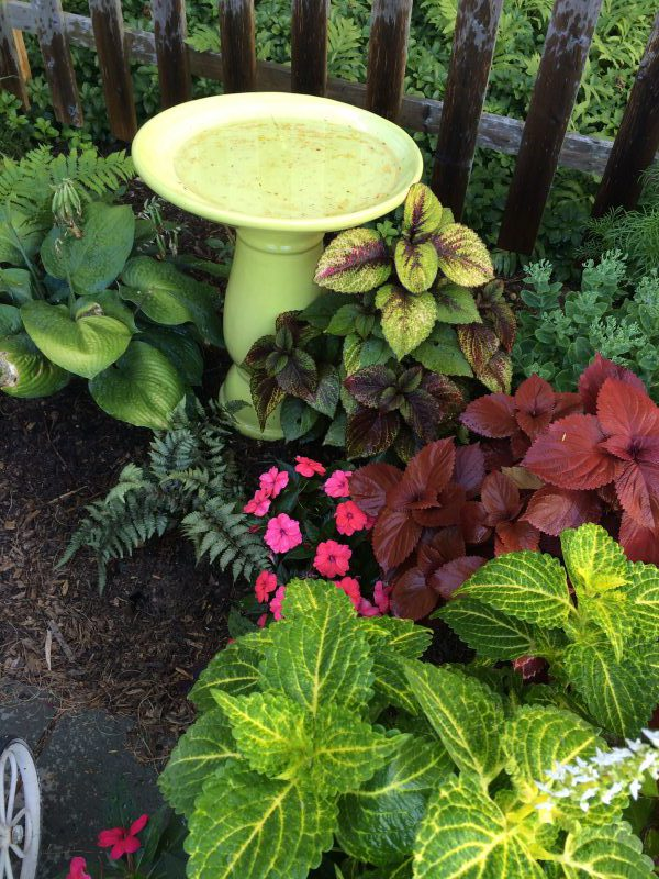 Bird Bath Shade Garden
