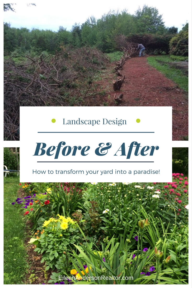 Remove shrubs blocking view, much them, dig out roots and plant a garden.
