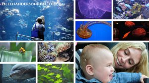 Mysitic Aquarium, Things to do with Kids
